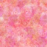 Fond en pastel intense de marguerite Photo stock