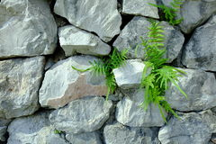 Fond en pierre Photo libre de droits