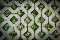 Fond en pierre peu commun de modèle avec des mauvaises herbes Image stock