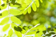 Fond ensoleillé abstrait de bokeh d'été Photo stock