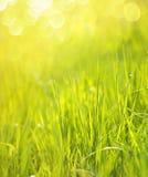 Fond ensoleillé d'herbe verte de ressort Photo stock