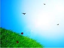 Fond ensoleillé de ciel et d'herbe de ressort Illustration Libre de Droits