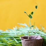 Fond ensoleillé de place de jardin de ressort qui respecte l'environnement en jaune pl Photographie stock libre de droits