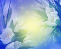 Fond ensoleillé de tulipes Photographie stock libre de droits