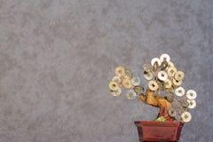 Fond est 2019 de bonsaïs d'arbre d'argent de style images stock