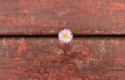 Fond et fleur rouges en bois photographie stock