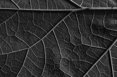 Fond et texture abstraits de feuille Image libre de droits