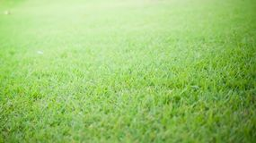 Fond et texture d'herbe verte Images stock