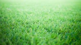 Fond et texture d'herbe verte Photo stock