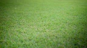 Fond et texture d'herbe verte Images libres de droits
