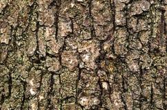 Fond extérieur d'image d'arbre Images stock