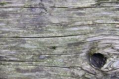 Fond extérieur en bois de texture de nature Photographie stock