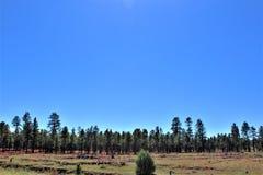 Fond för ritt för sammankomst för frihet för stolpe 86 för amerikansk legion - raiser i nordliga Arizona, Förenta staterna royaltyfri bild