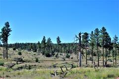 Fond för ritt för sammankomst för frihet för stolpe 86 för amerikansk legion - raiser i nordliga Arizona, Förenta staterna arkivbild