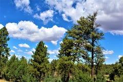 Fond för ritt för sammankomst för frihet för stolpe 86 för amerikansk legion - raiser i nordliga Arizona, Förenta staterna royaltyfri foto
