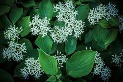 Fond fait de feuilles fraîches de vert et fleurs blanches Contexte dynamique vert images stock
