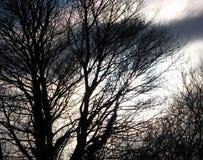 Fond fantasmagorique brouillé des arbres silhouettés et du ciel orageux Photos libres de droits
