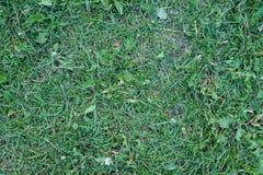 Fond fauché d'herbe verte image libre de droits