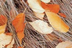 Fond Feuilles de bouleau sur l'herbe sèche Photographie stock libre de droits