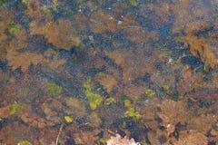 Fond Feuilles de chêne sur la glace Image libre de droits