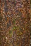 Fond fictif d'écorce d'arbre de gombo photographie stock libre de droits