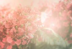 Fond flamboyant rouge de fleur Image stock