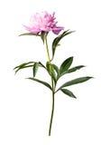 Fond floral étonnant Images stock