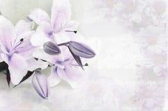 Fond floral Photos stock