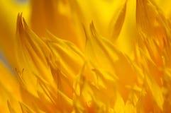 Fond floral images libres de droits