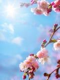Fond floral abstrait de ressort Image libre de droits