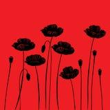 Fond floral avec des pavots illustration stock