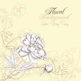 Fond floral avec les pensées et la pivoine Photos stock