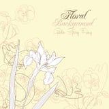 Fond floral avec un iris Images stock
