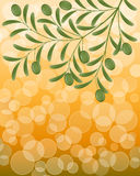 Fond floral avec une branche d'olivier Photographie stock libre de droits