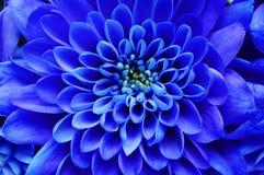 Fond floral bleu Images stock