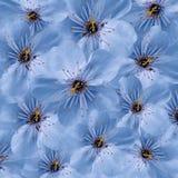 Fond floral bleu Grande cerise blanche de fleurs collage floral Composition de fleur Photo libre de droits