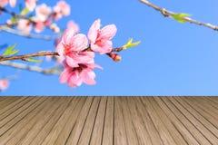 Fond floral - branche se développante de pêche, contre le b clair photographie stock libre de droits