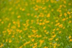 Fond floral brouillé Image libre de droits