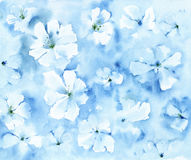 Fond floral d'aquarelle Photos libres de droits