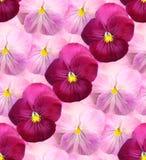 Fond floral de Ð'eautiful des violettes images stock