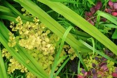 Fond floral de fond de fond floral floral floral de fond Photographie stock