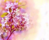 Fond floral de beau ressort photos libres de droits