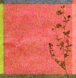 Fond floral de couleur Photo libre de droits