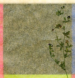 Fond floral de couleur Photos stock