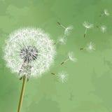 Fond floral de cru avec le pissenlit de fleur Image libre de droits