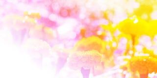 Fond floral de la fleur Garden photographie stock
