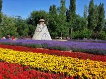 Fond floral de la fleur Garden Photographie stock libre de droits