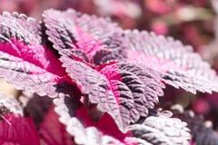 Fond floral de la fleur Garden Images libres de droits