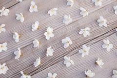 Fond floral de mod?le image stock