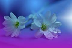 Fond floral de source abstraite d'art pour la conception Gouttelette, baisse Pourpre, fleur Fond de frontière de ressort Images stock